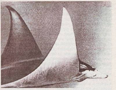 Гигантский морской змей