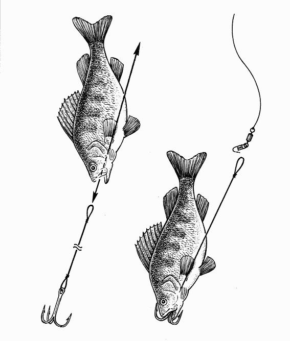 ловля карася в озерах и прудах