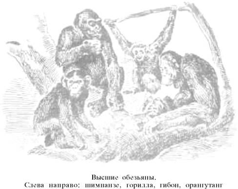 О ловкости и ее развитии