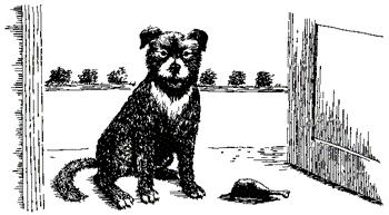 Душа собаки