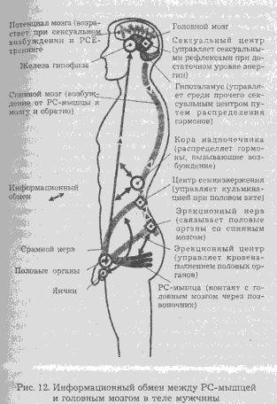 Сексуальная энергия учение