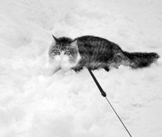 Как сделать кошке прививку фото 473