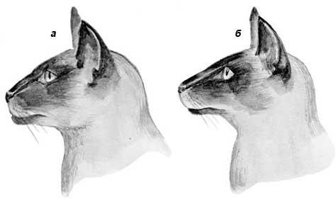 Книга: Сиамские кошки