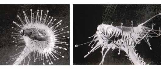 Комар картинка черно белая