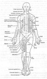 Эпидуральная и спинальная анестезия