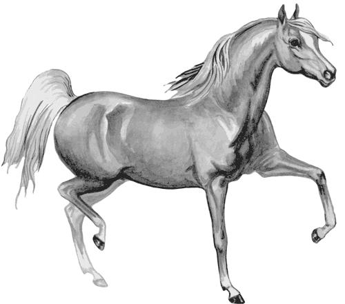 Арабская лошадь (арабский скакун ...: www.e-reading.club/chapter.php/81810/6/Gerasimov_-_Loshadi.html
