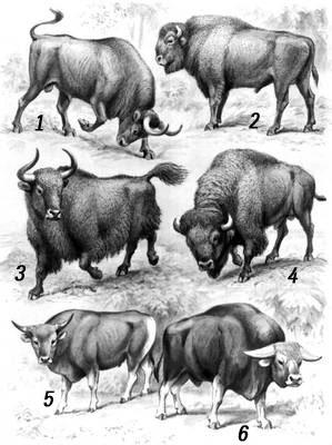 Краткое содержание мёртвым не больно быков