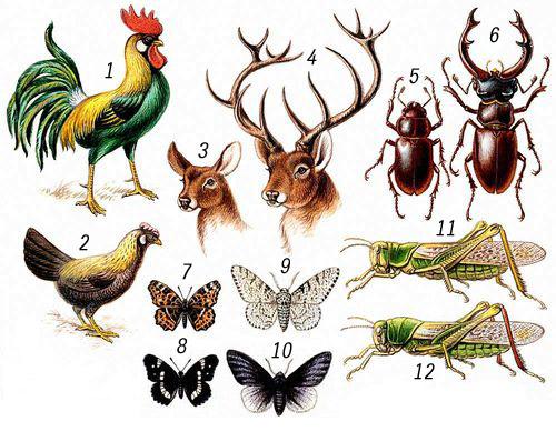 Примеры диморфизма у животных.