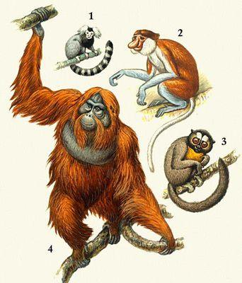 книга год под знаком гориллы
