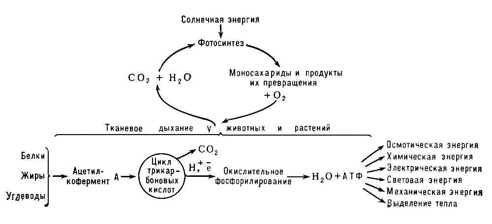 Схема превращения энергии в