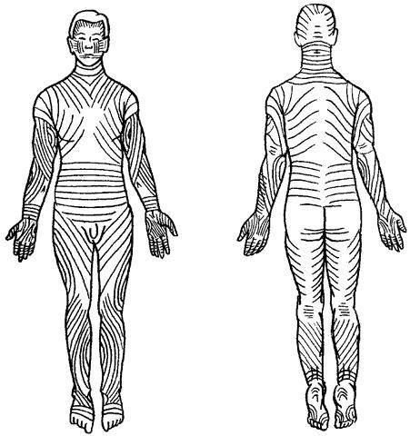 Оздоровительный точечный массаж  Точки акупунктуры на