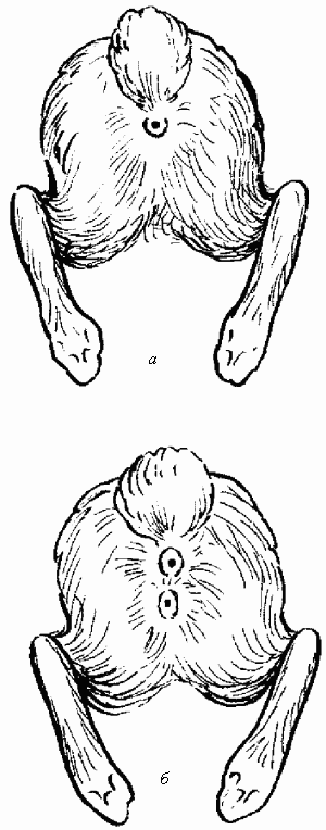otsasivanie-spermu-iz-chlena-po-vzroslomu-pornuhu