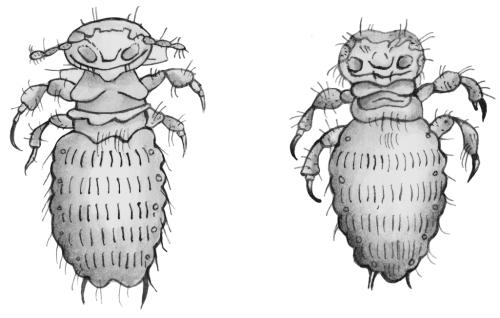 можно ли убить паразитов в организме трихополом