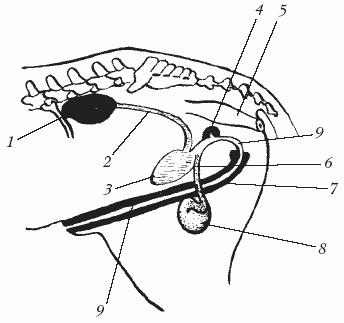 Расположение хуя в глотке, голая стройная с большой грудью фото