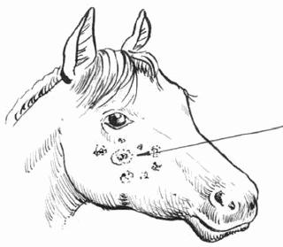 фото сап лошадей