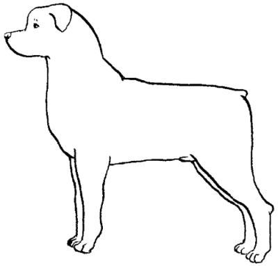 разных нарисовать инструкция настоящий щенка собак как выглядит как который