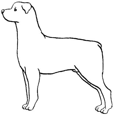 Инструкция как нарисовать щенка разных собак который выглядит как настоящий
