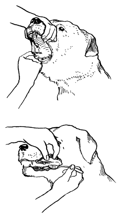 Ротвейлеры