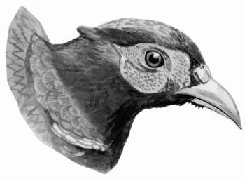 Болезни домашней птицы