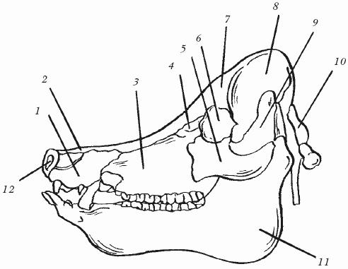 При мочеиспускании боль в правом паху у
