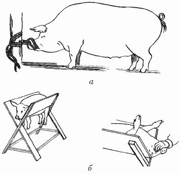 Книга: Болезни свиней