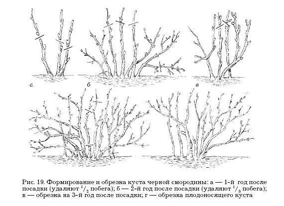 Книга: Садовые деревья и