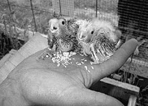 влияние кислот и чайной соды на организм птицы