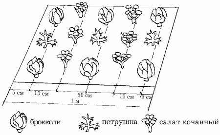 Схема посадки участка