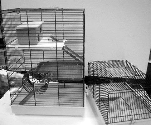 Как построить дом для морской свинки 141