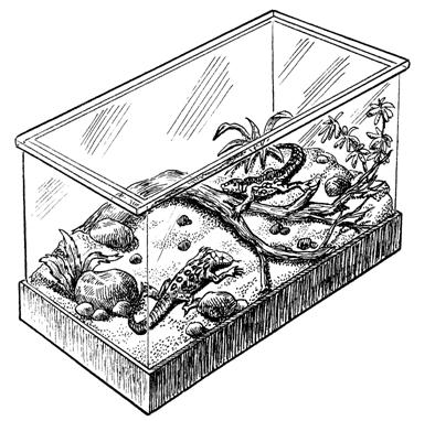 Террариум дизайн