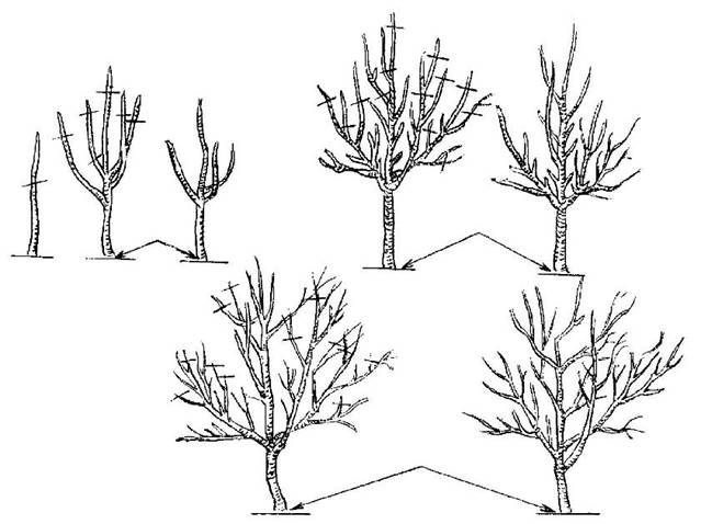 Садовые инструменты и