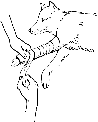 Ветеринарный справочник для