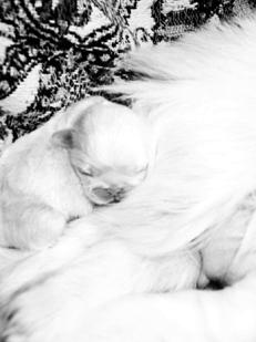 вакцина от глистов для кошек купить