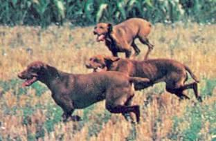 Энциклопедия собаки. Охотничьи собаки