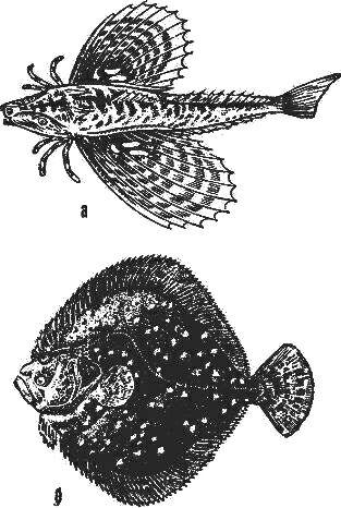 acarorum catalogus acariformes calyptostomatoidea calyptostomatidae erythraeoidea