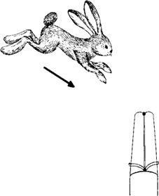 Может ли борзая искать зайца? Охота на зайца