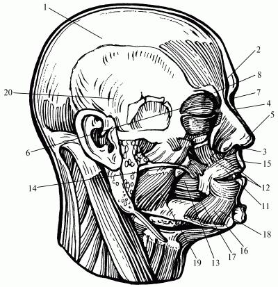 Книга: Логопедический массаж