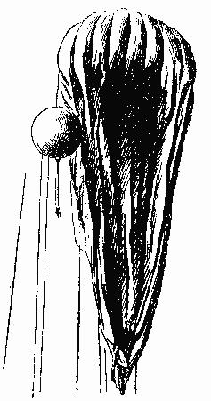 Потолок мира