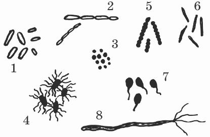 травки от паразитов в организме человека