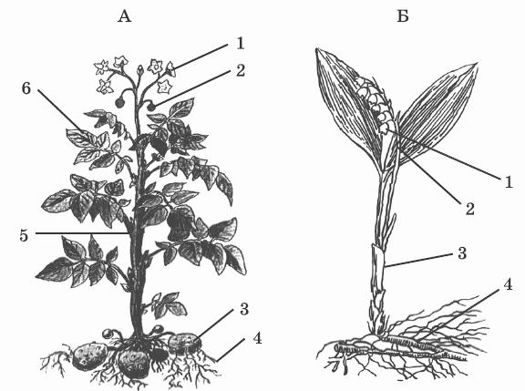 Опишите строение семян