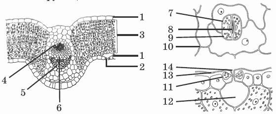 биология тесты 6 класс автор гекалюк