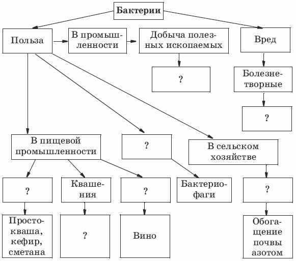 Схема на тему бактерии