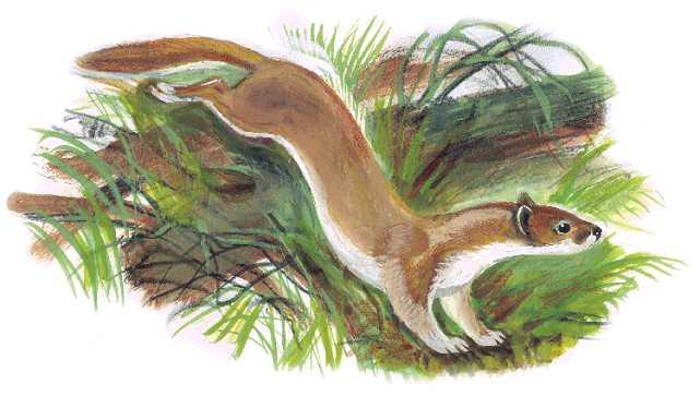 Азбука живой природы