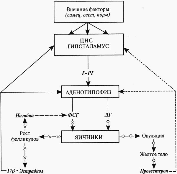 Схема нейроэндокринной