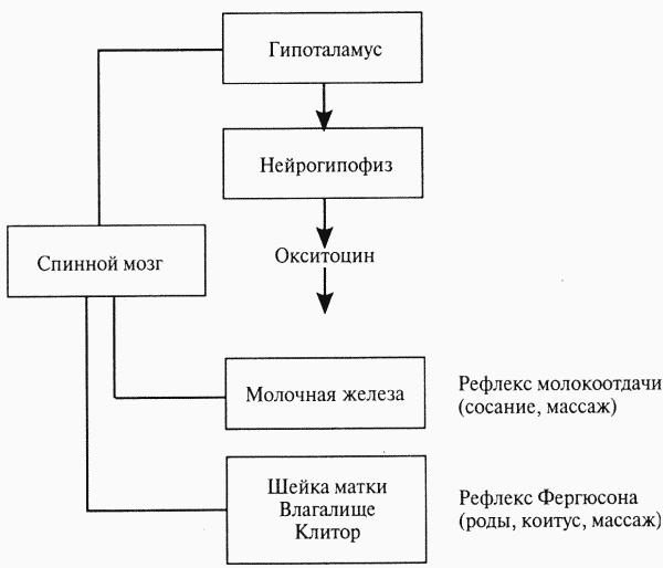 Физиология размножения и