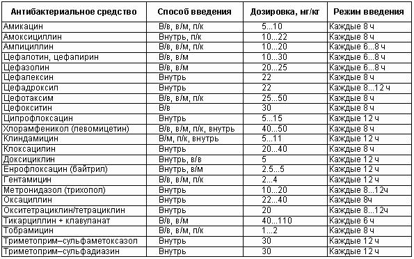 Размеры пениса у кобеля