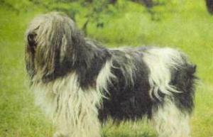 Атлас пород собак