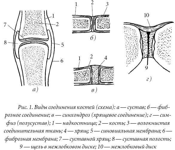вида соединений костей: