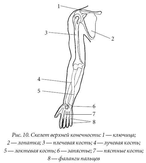 Лечение спины и суставов.