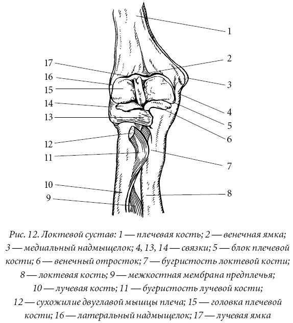Сустав Локтевой